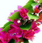 Die Blüte in der Blume