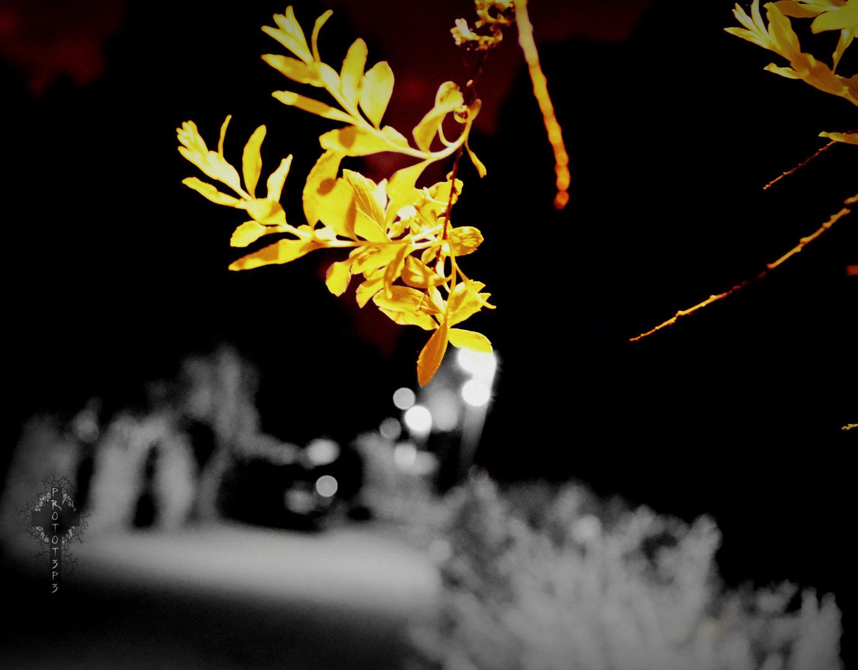 Die Blüte in der grauen Stadt unter'm blutroten Himmel