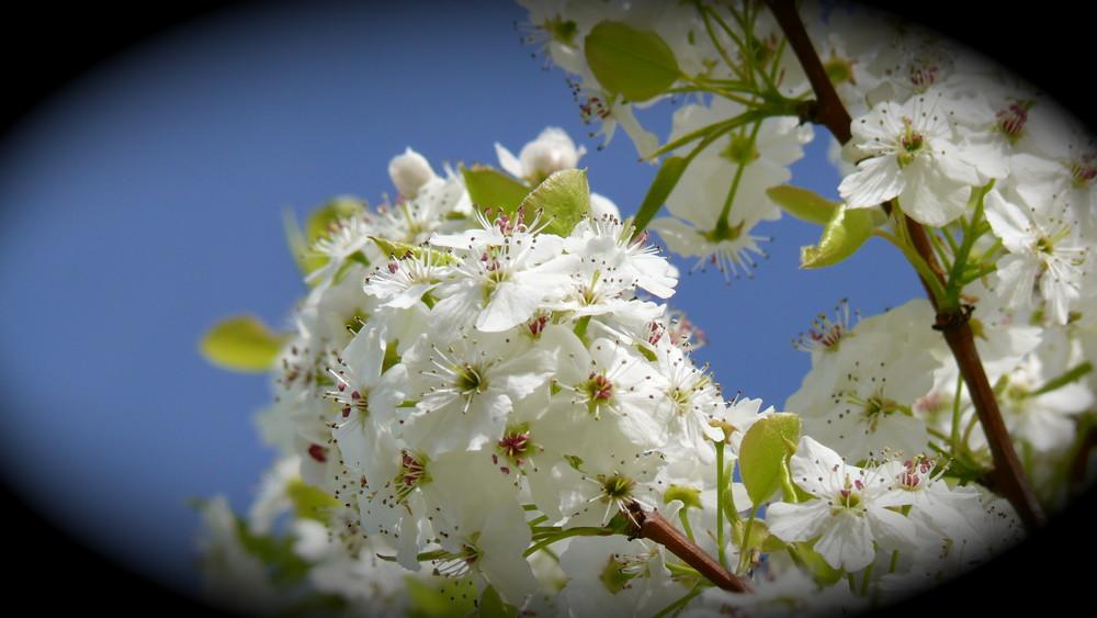 Die Blüten