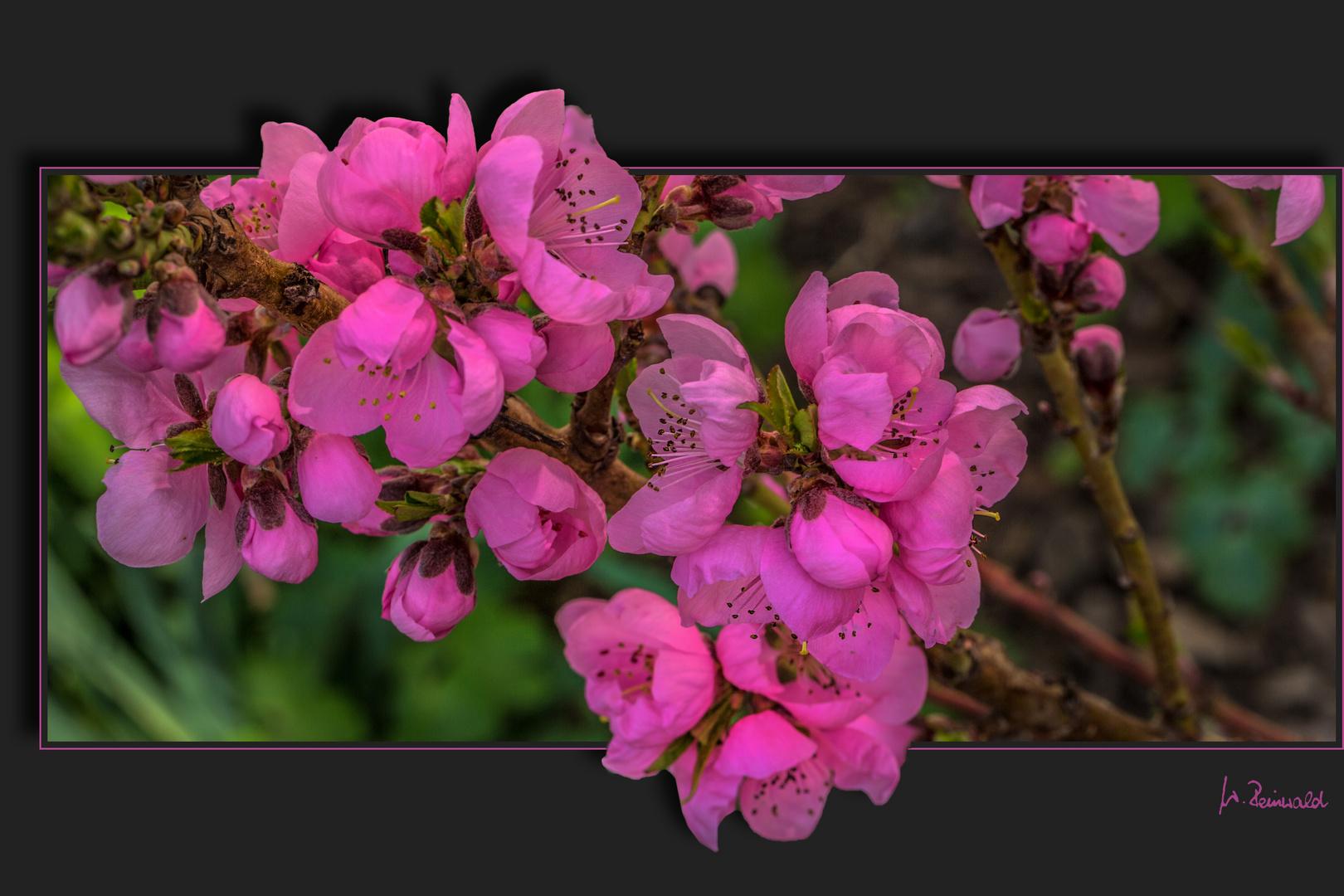 Die Blüten ...