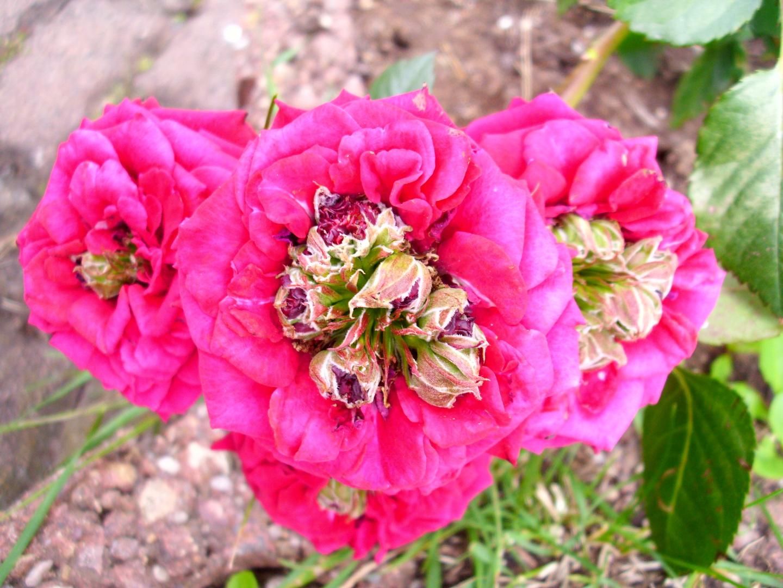 Die Blüten in der Blüte