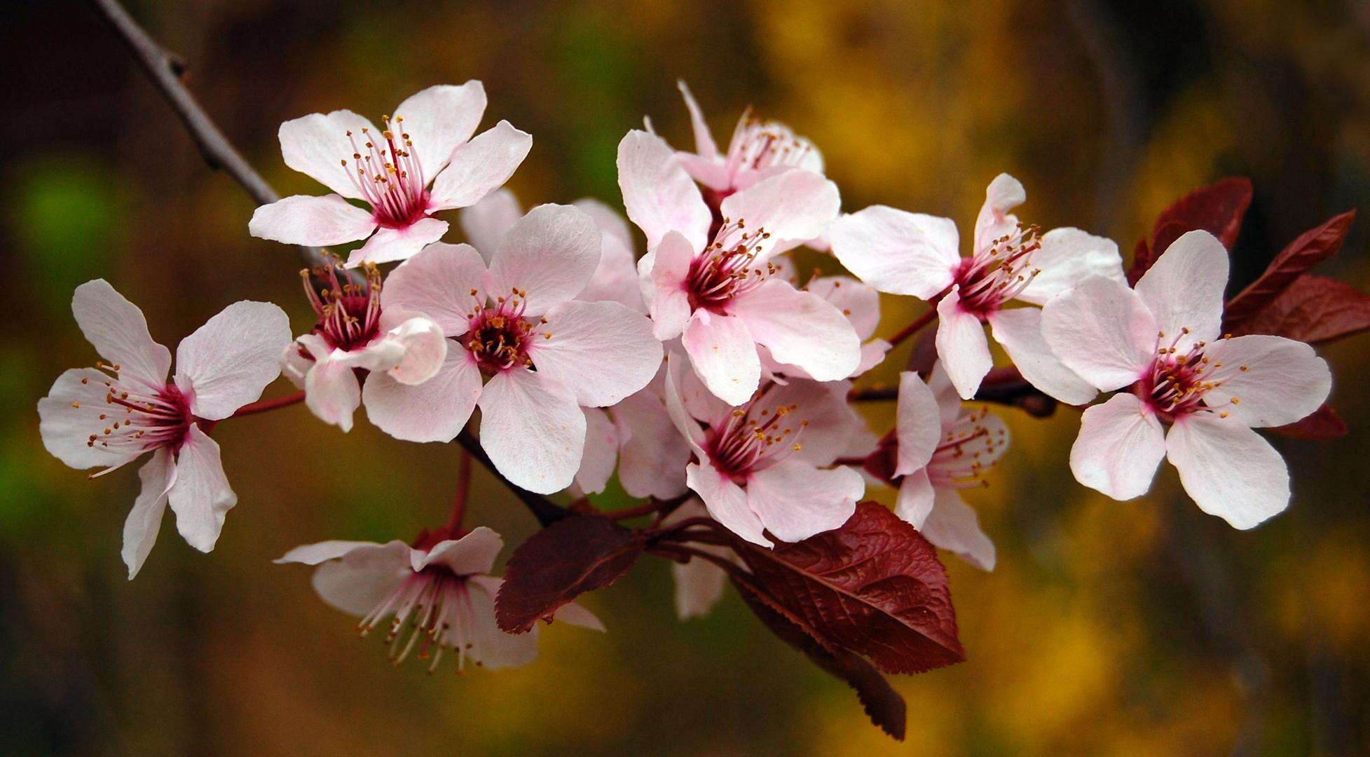 Die Blüten in Nachbars Garten !