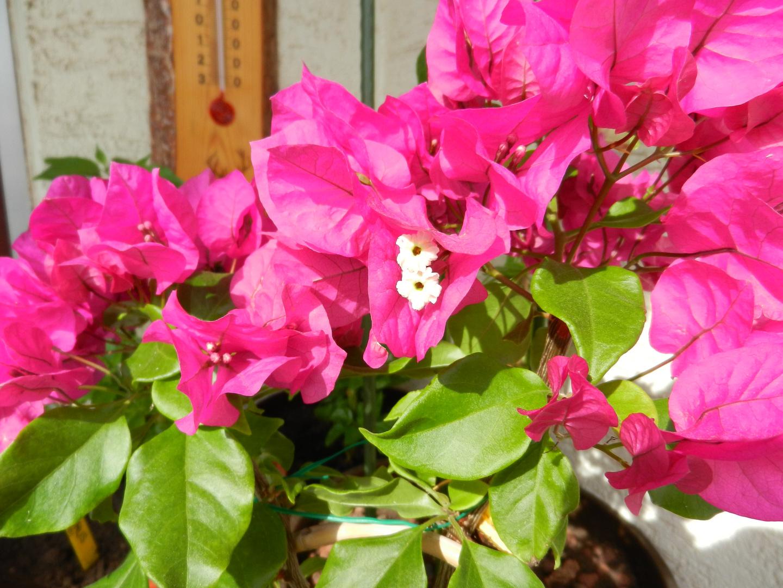 Die Blütenbracht