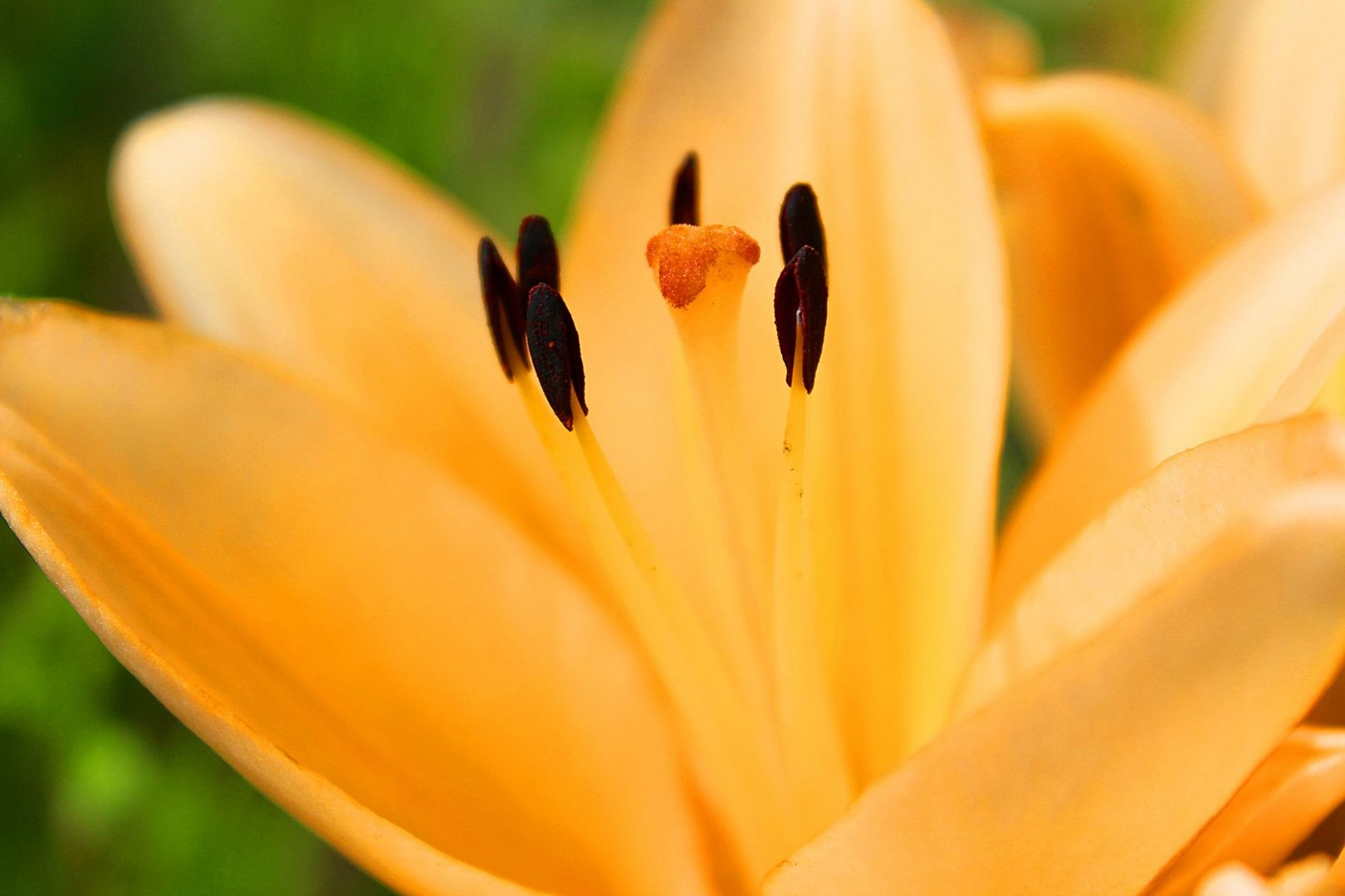 Die Blume.
