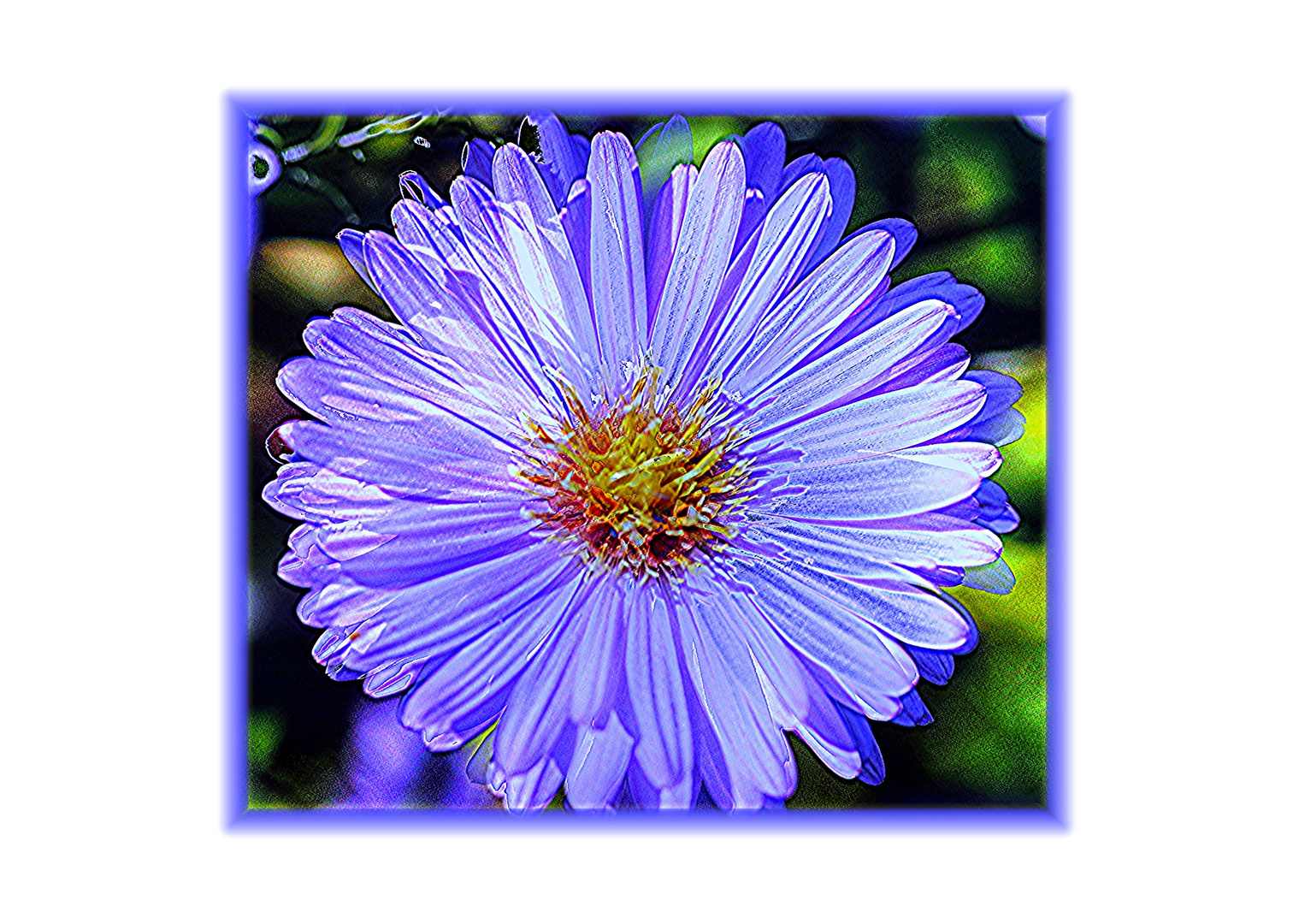 Die Blume blau...