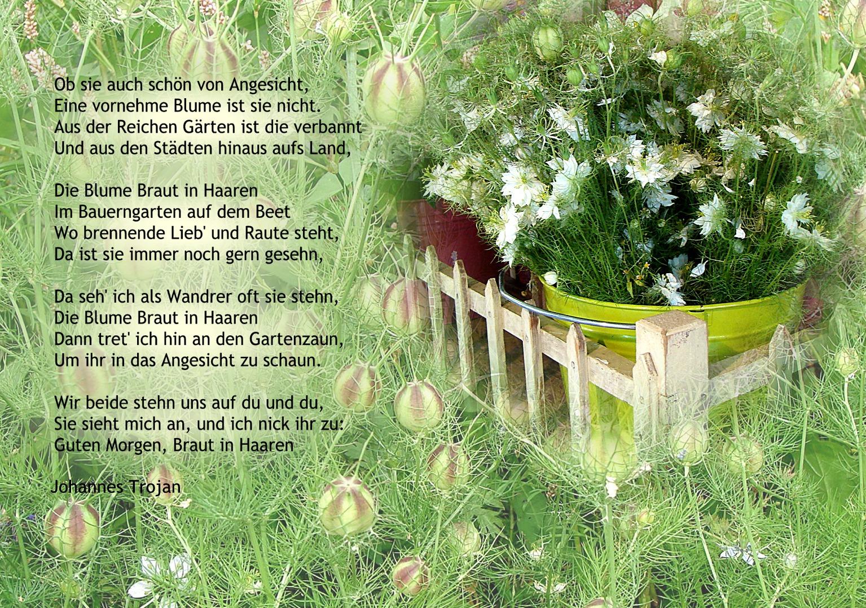 "Die Blume ""Braut in den Haaren"""