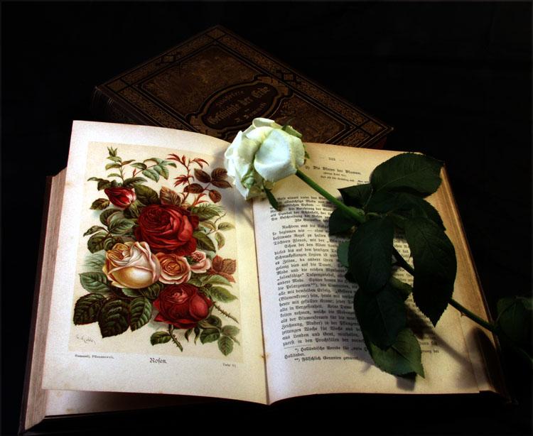 Die Blume der Blumen