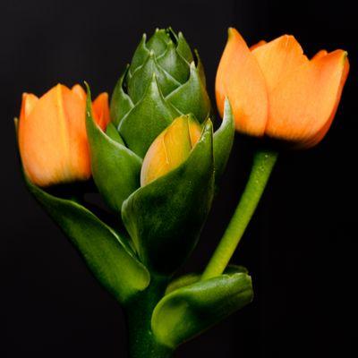 Die Blume, deren Name ich nicht kenne.