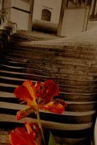 Die Blume im Buch