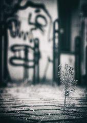 die Blume und die Fratze