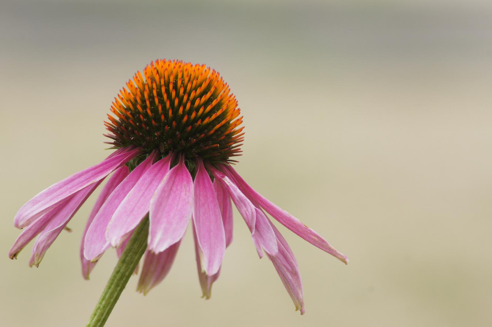 die Blume von Nebenan