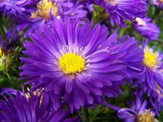 die Blumen:)