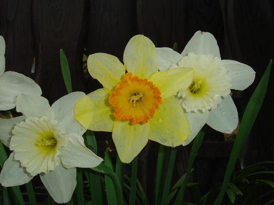 Die Blumen des Frühlings
