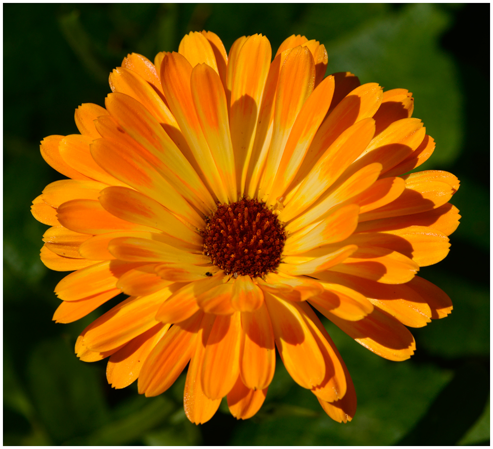 Die Blumen des Sommers...