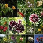 Die Blumen in fremden Gärten