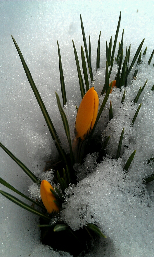 Die Blumen kommen....