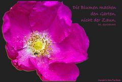 Die Blumen machen den Garten,...