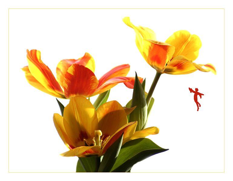 Die Blumenfee