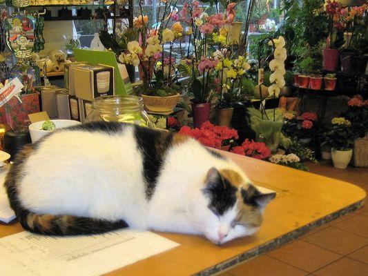 Die Blumenladenkatze... auf dem Tresen hat sie alles und alle im Griff :-)
