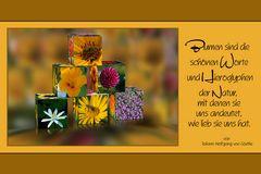 Die Blumenpyramide
