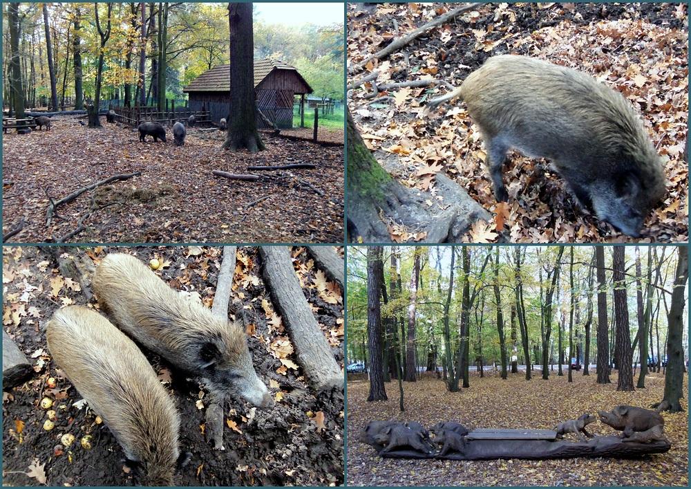Die Borstenviehcher vom Spandauer Forst
