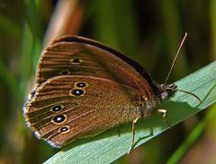 Die braunen sind wieder da. Glücklicherweise nur die Schmetterlinge 1 (:o)