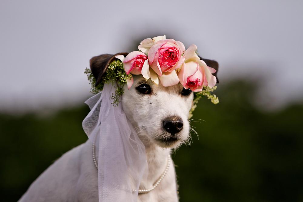 Die Braut, die sich nicht traut..