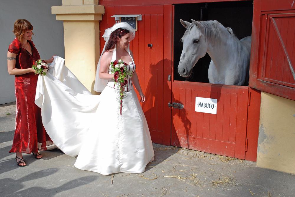 Die Braut und das Pferd