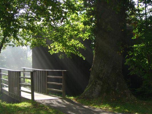 Die Brücke zum Licht