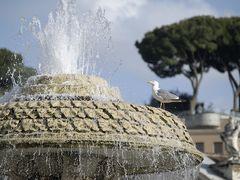 Die Brunnen auf dem Petersplatz sind nicht nur bei den Menschen beliebt.