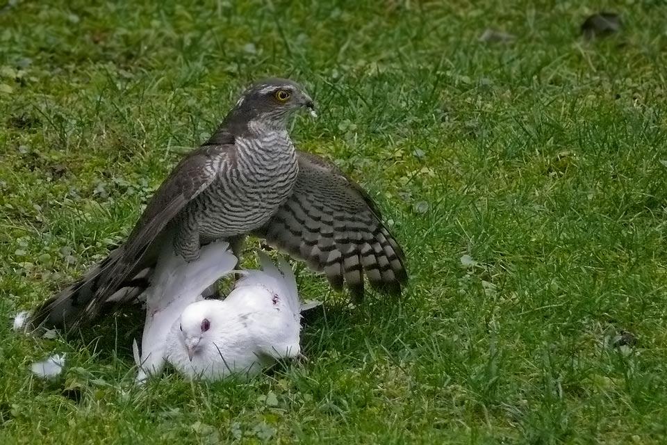 Die Brutalität der Natur...