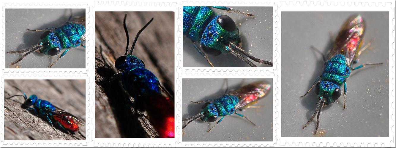Die Bunte Insektenwelt ......