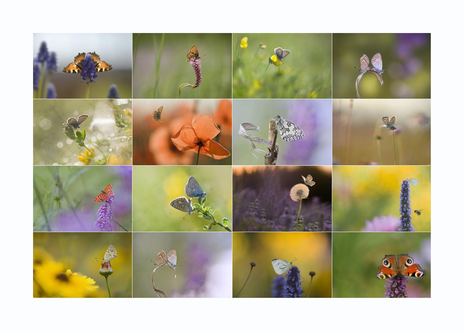 Die bunte Welt der Schmetterlinge