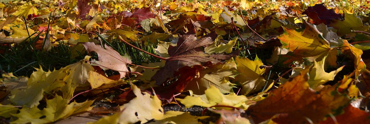 die bunten Blätter