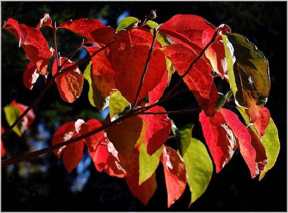 Die bunten Blätter...
