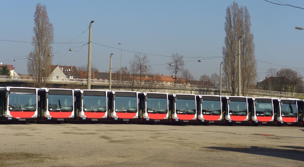 Die Busschlange