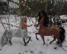 Die Centauren Birke und Erle