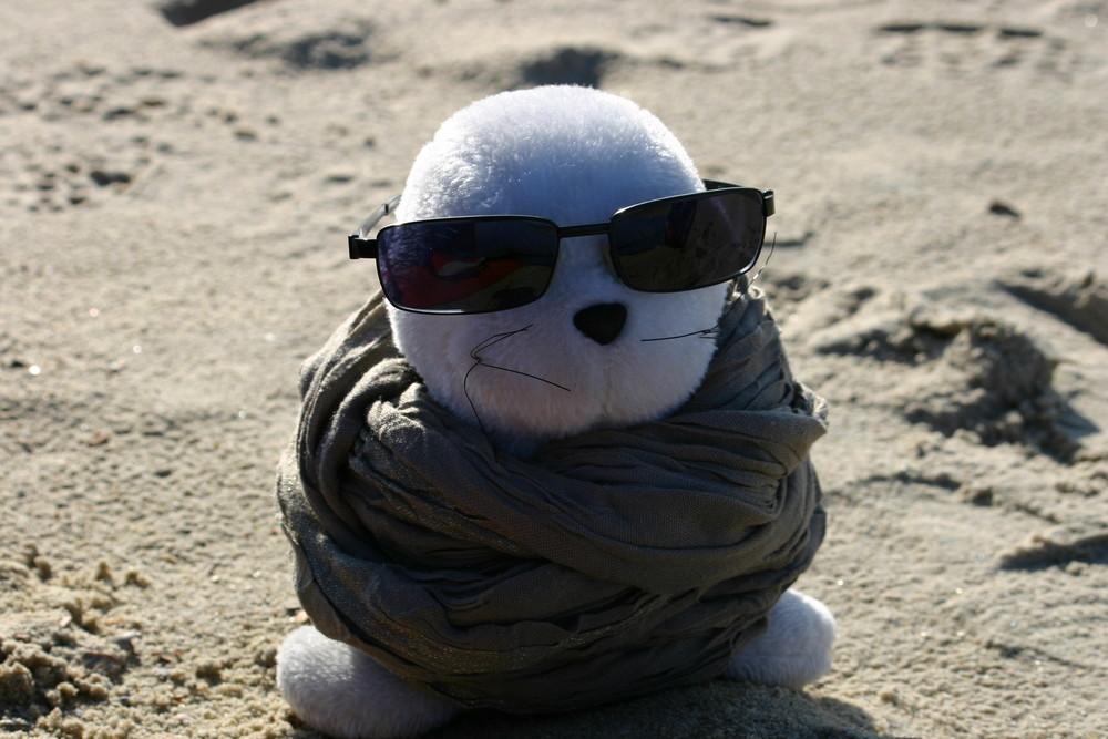 Die coolste Robbe der Welt!