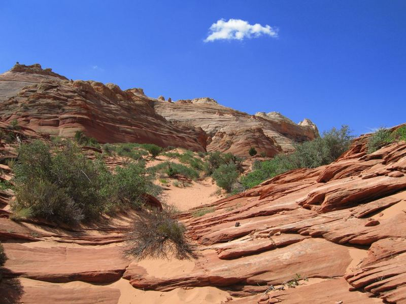 Die Coyote Buttes