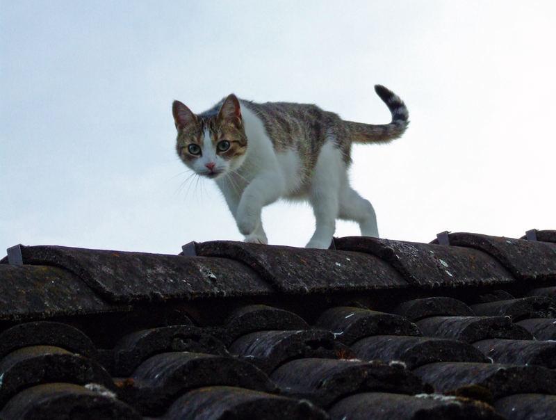 Die Dachhasen sind wieder unterwegs...