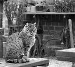 die dicke Katze aus Ribbeck