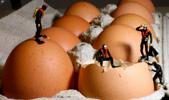 Die, die das Gelbe vom Ei suchen....