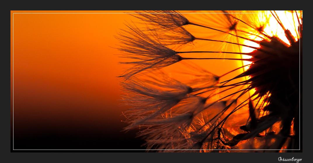 Die, die mit dem Wind fliegen 8