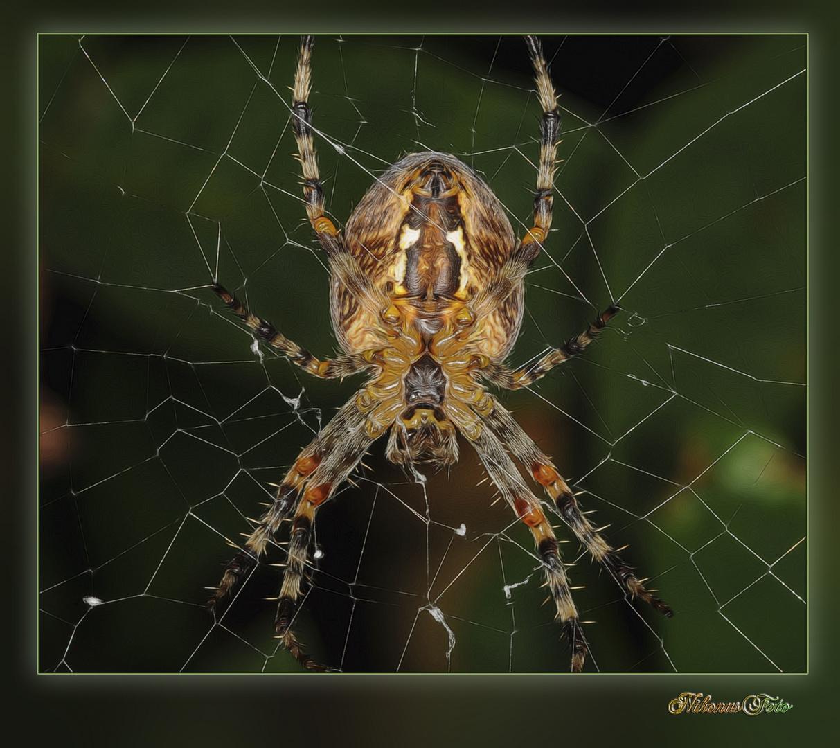 die die Spinne