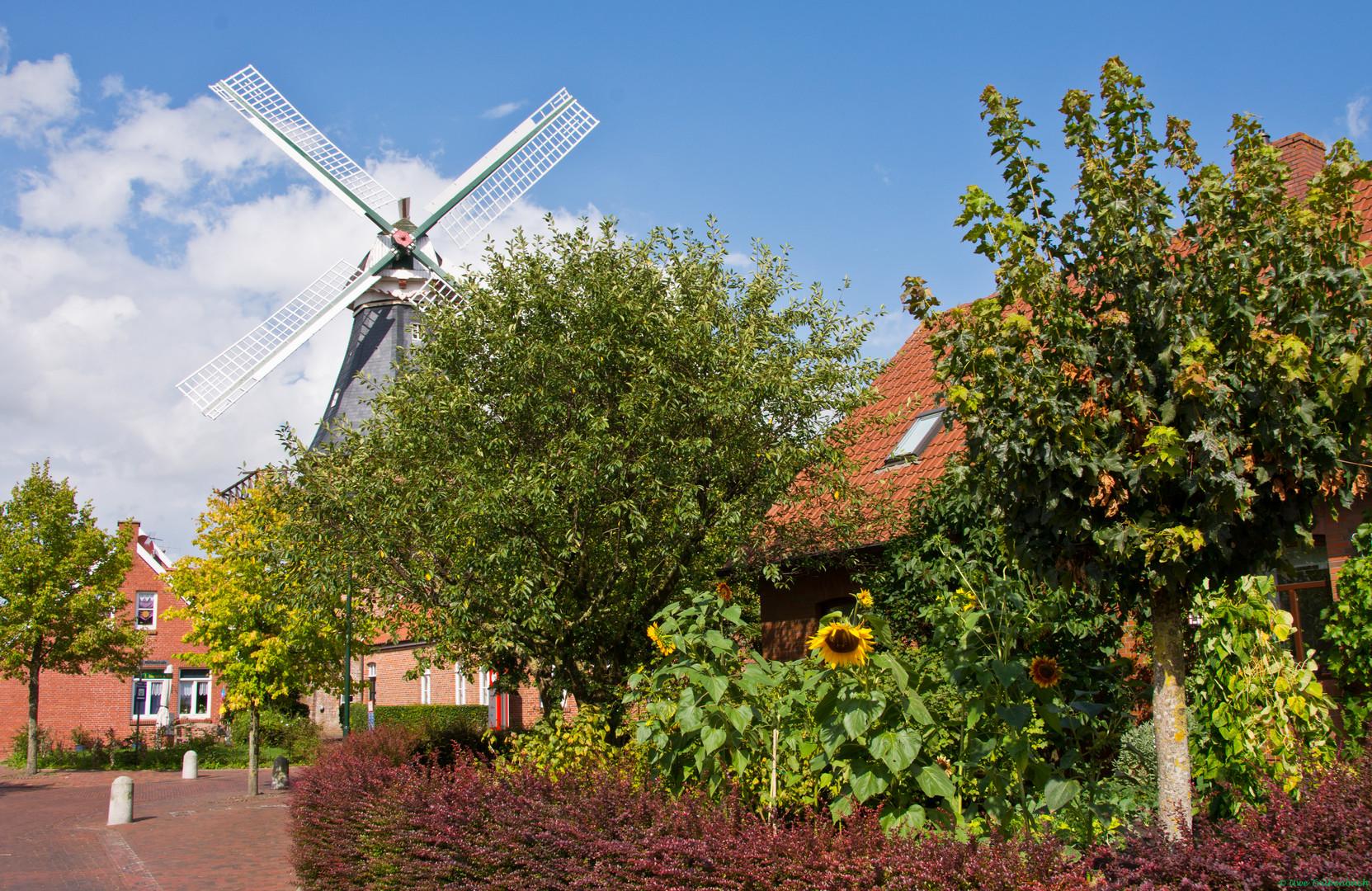 Die Ditzumer Mühle (2)