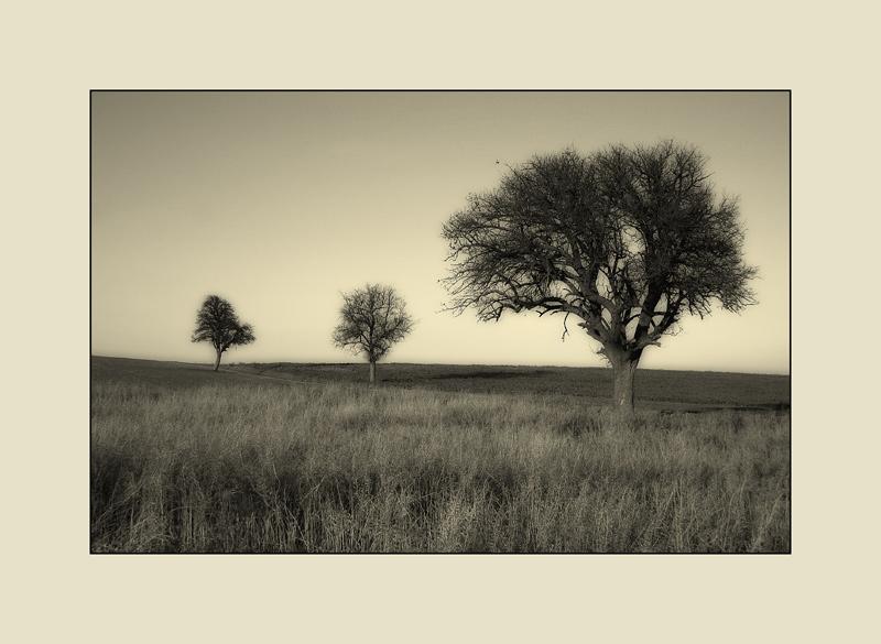 die drei Bäume im Dezember