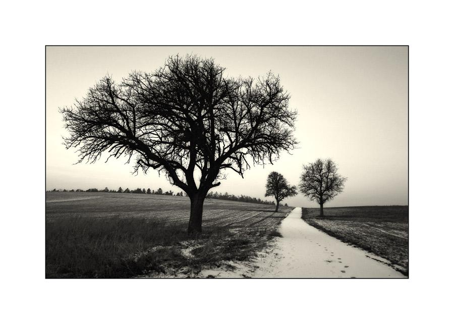die drei Bäume im Januar