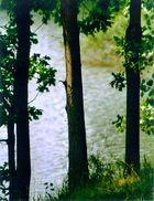 Die Drei Bäume vom See