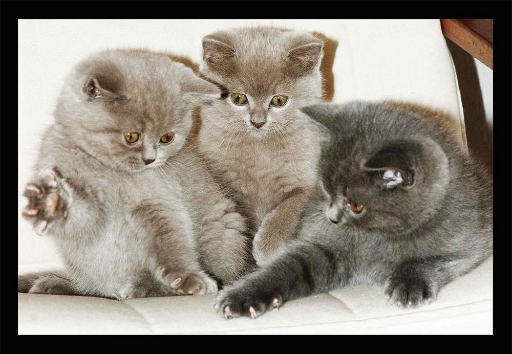 Die Drei ;O)