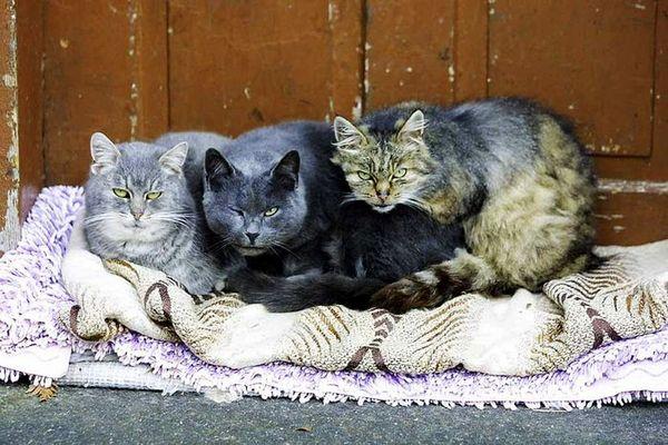 die Drei vom Nachbar